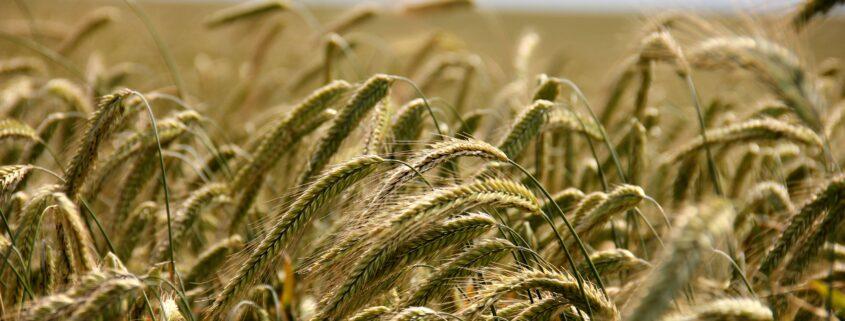 Biohacking och långsamma kolhydrater